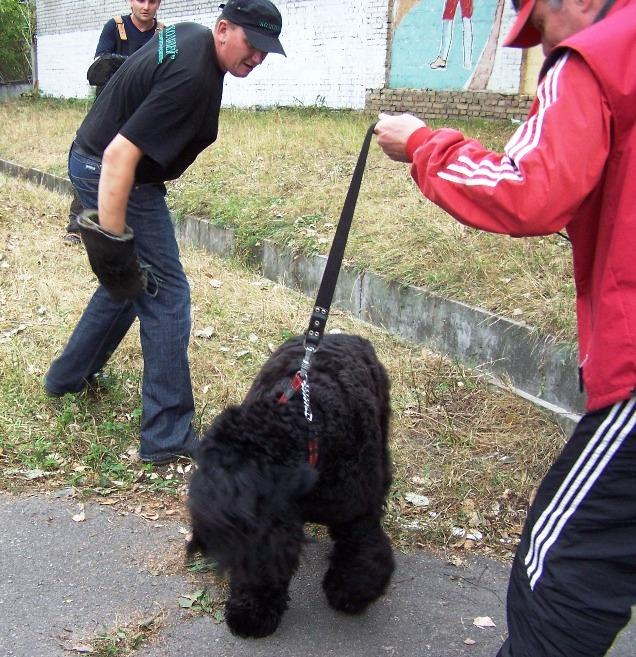 Black terrier Amulet, Testing the working qualities 27-09-2009. Kennel SOKROVISCHE RUSI. Photo 1