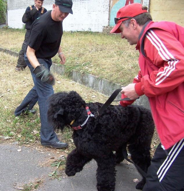 Black terrier Amulet, Testing the working qualities 27-09-2009. Kennel SOKROVISCHE RUSI. Photo 2