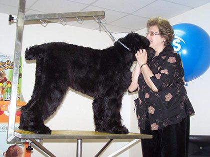 Master Class. Haircut of Black Russian Terrier - photo 1