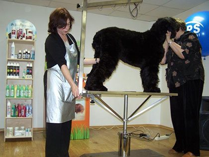 Master Class. Haircut of Black Russian Terrier - photo 3