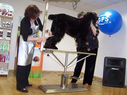 Master Class. Haircut of Black Russian Terrier - photo 4