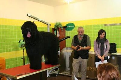 Haircut Black Russian Terrier, Marco Vaccaroni - photo 4.9