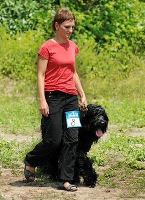 Black Russian Terrier. Kennel Sokrovische Rusi. Working trial, 1