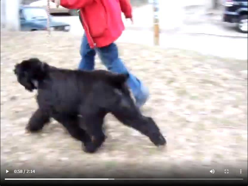 Video – Ol Grand Sokrovische Rusi
